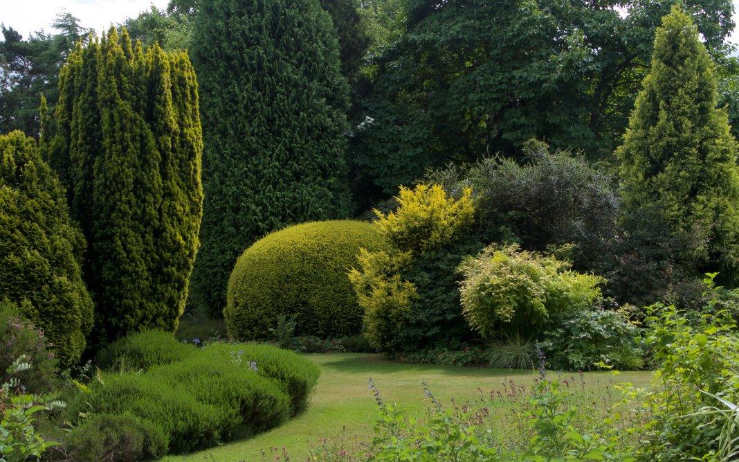 вечнозелёные деревья примеры