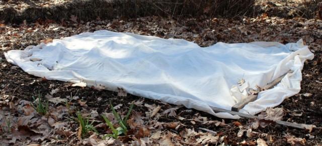 Укрытая грядка с луком, посаженным под зиму