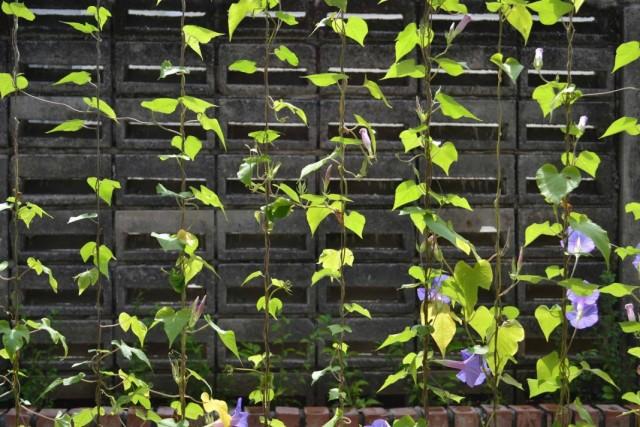 Опора в виде ширмы из натянутой лески для лёгких вьющихся растений