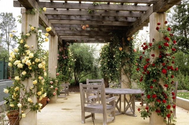 Пергола для плетистых роз, высаженных у террасы