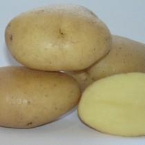 Сорт картофеля для Центрально-Черноземного региона - Вымпел