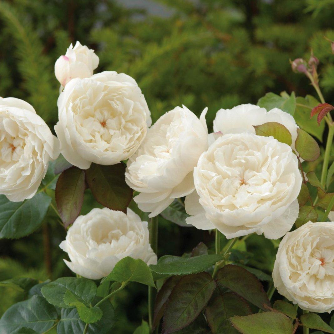 Rose-William-and-Catherine-1