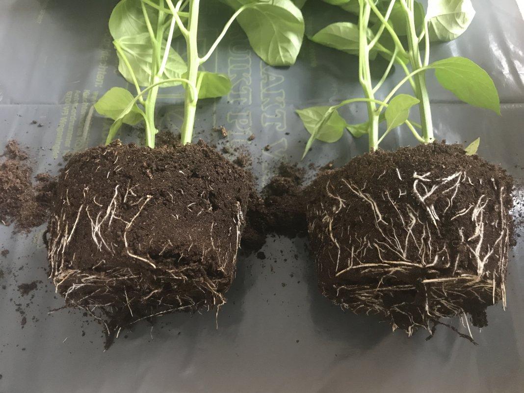 стимуляторы роста корневой системы
