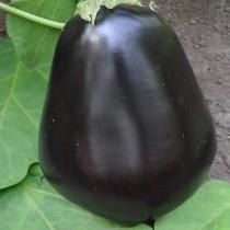Баклажан сорт Чёрный красавец
