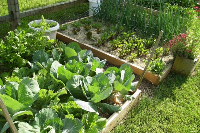 Мочевина для удобрения садовых растений