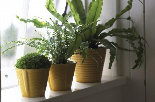 Комнатные растения в холодной северной комнате