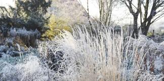 Зимний цветник