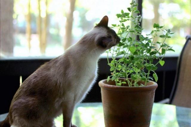 Кошка объедает комнатное растение