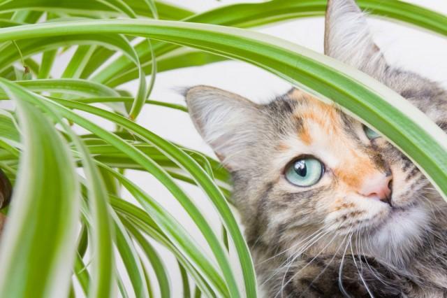 Как защитить комнатные растения от кошки?