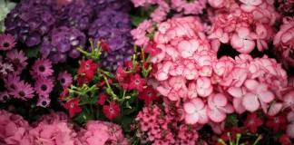 Модные палитры цветников на сезон 2018
