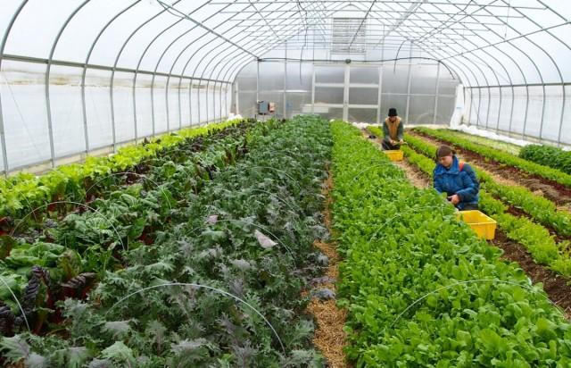 Теплица для выращивания овощей