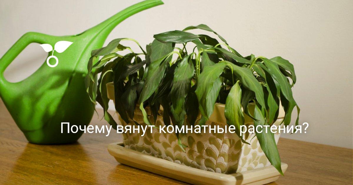 Завядшее растение