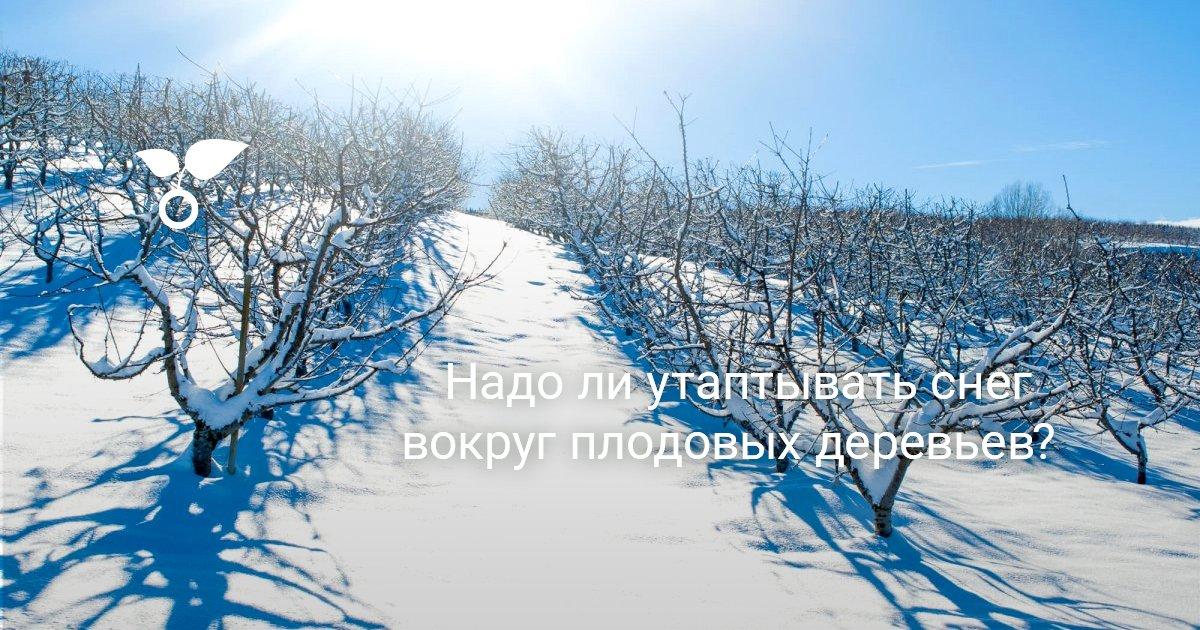 """Занятие по исследовательской деятельности детей """"Зачем деревьям снег{q}"""""""
