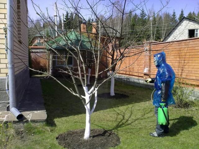 Опрыскивание деревьев ранней весной