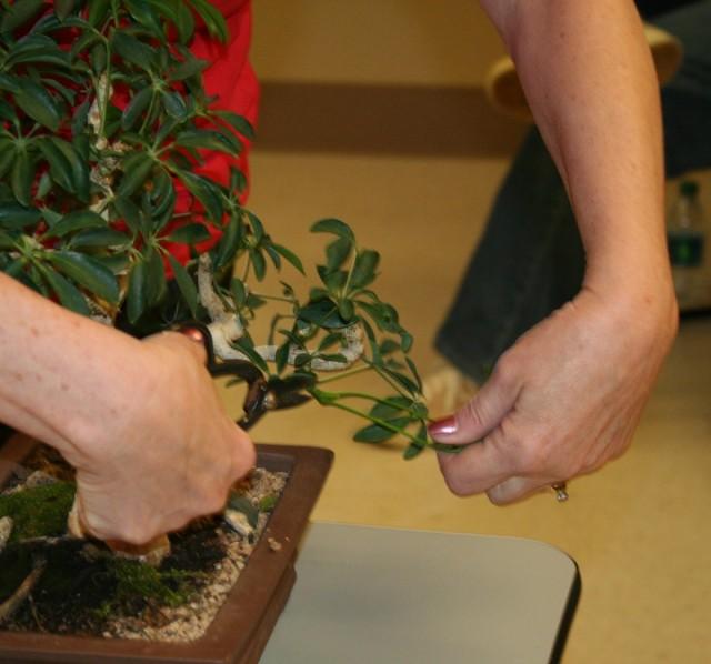 Обрезка комнатного растения