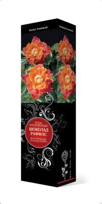 Роза «Шоколад Раффлс» (Rosa 'Chocolate Ruffles')