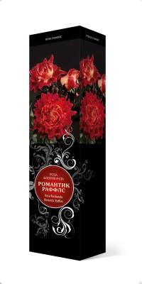 Роза «Романтик Раффлс» (Rosa 'Romantic Ruffles')