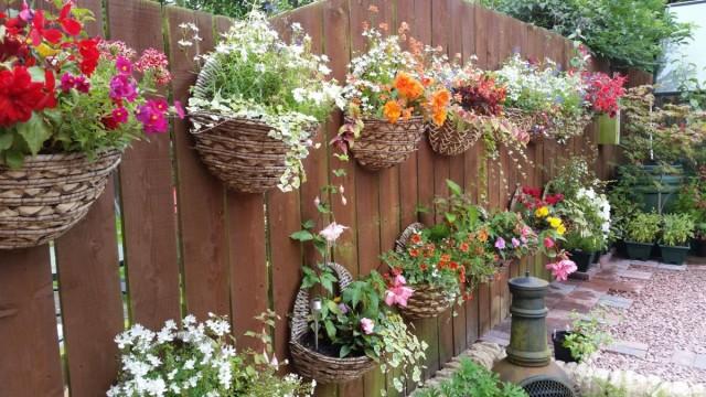 Однолетние цветы в подвесных кашпо, украшающие забор