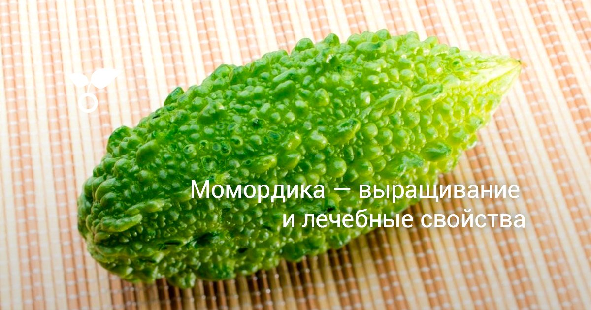 Момордика - лечебные свойства и применение