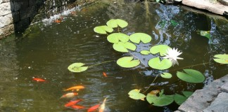 Декоративный водоём