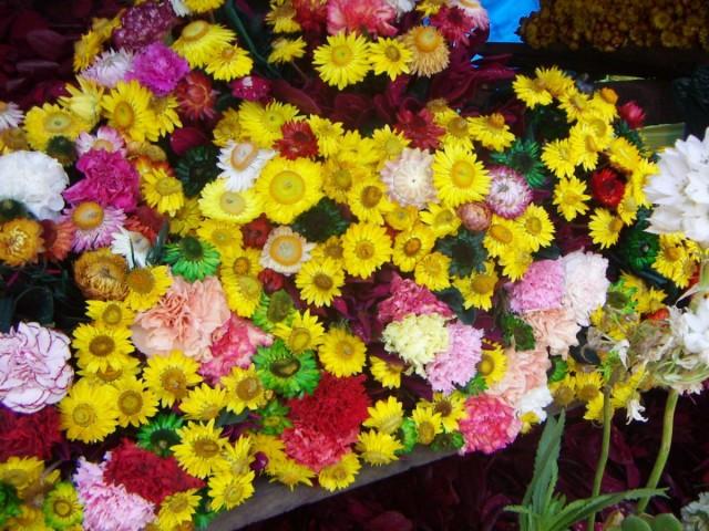 Засушенные цветы