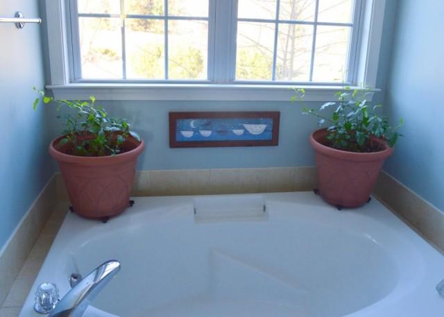 Свинчатка может расти и в ванной, но только на подоконнике