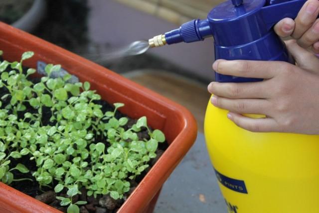 Обработка рассады биопрепаратом