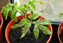 Недостаток питательных веществ у томатов