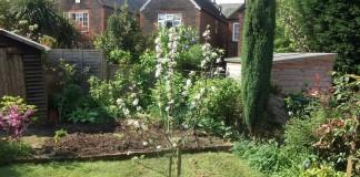 Молодое дерево в саду