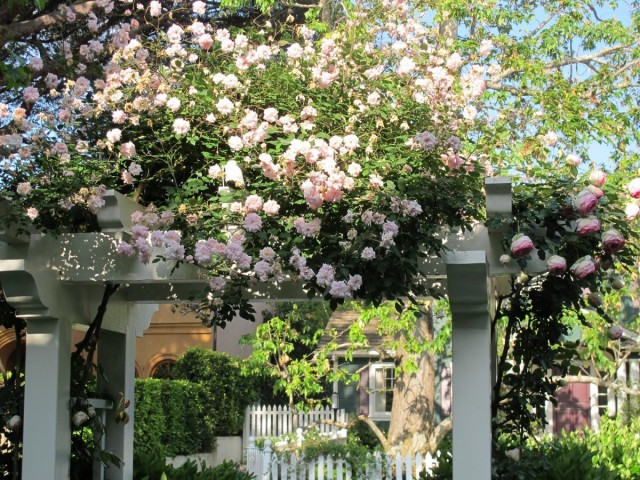 Опора для плетистой розы в виде арки
