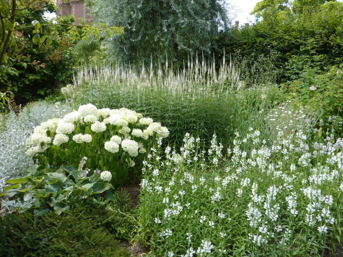 Лучшие растения для «белых» цветников. Белые многолетние цветы. Фото —  Ботаничка.ru