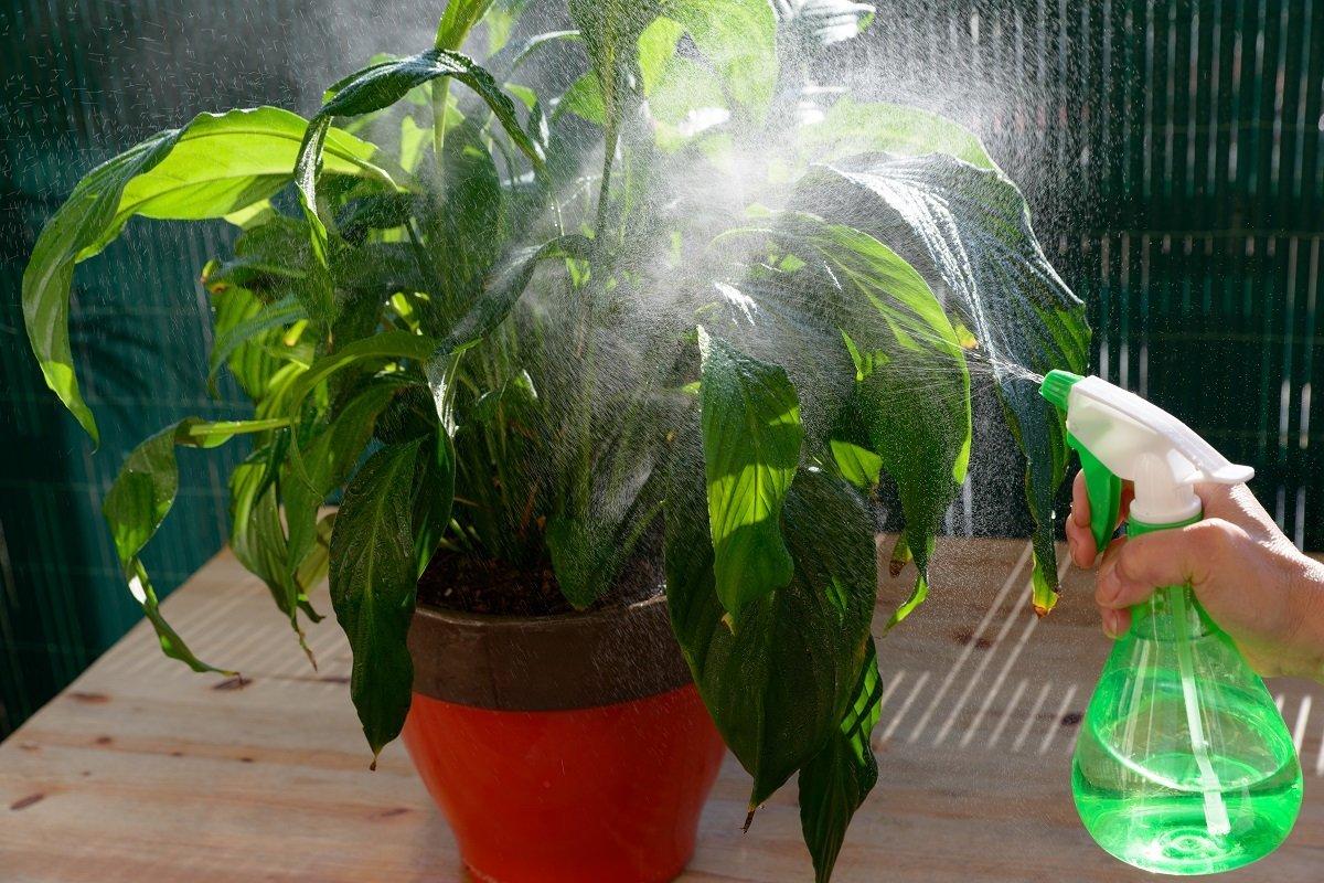 опрыскивание комнатных растений цирконом