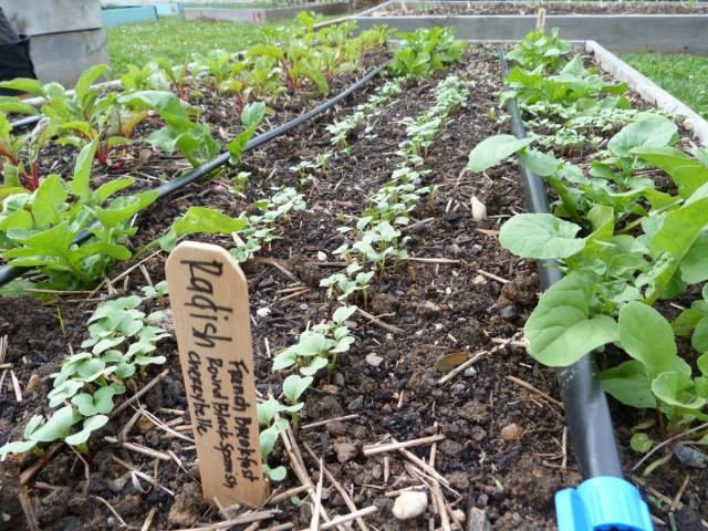 Капельный полив - удачное решение для тех дачников, которые не могут вовремя поливать огород