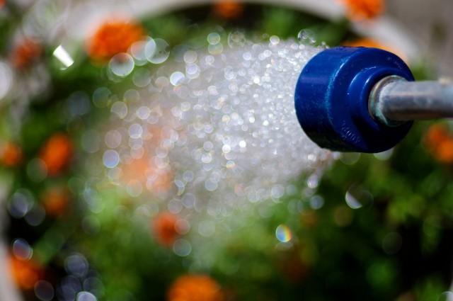 Полив холодной и мощной струей воды из шланга - двойная ошибка