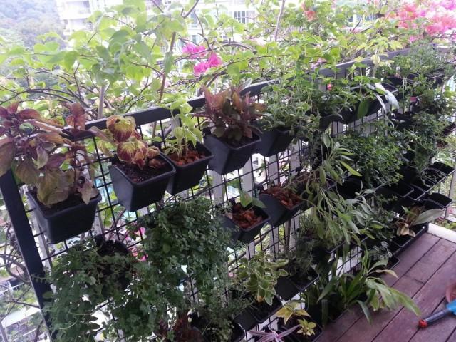 Для горшечного вертикального озеленения обязательно подбирают некрупные, легкие емкости