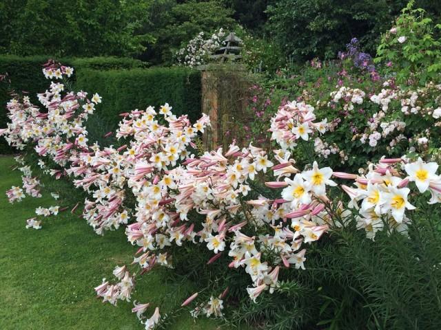 Выбор правильного места для лилий в саду - залог их красоты и здоровья на многие годы