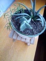 neponyatnyiy-kaktus