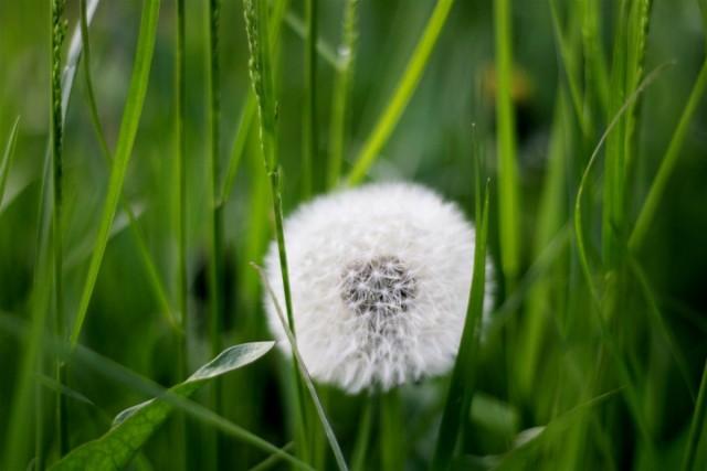 Полезные растения, которые выросли не на своем месте, называют засорителями