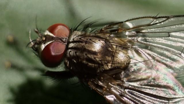 """Черновик публикации """"Чистый дом от мух — освежить знания в новом формате!"""": https://www.botanichka.ru/?p=102202&preview=true"""