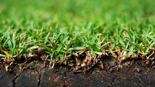 Дерновая земля - это специально подготовленный субстрат на основе дёрна, покрытого травой