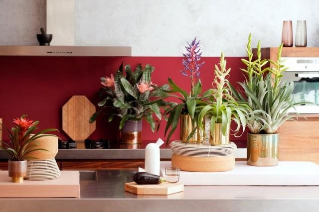 Устойчивость к обычному воздуху городских квартир у всех бромелиевых относительна