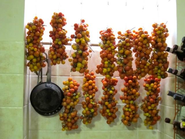 Хранение томатов на ветках