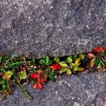 Маленькая сухая стенка с растениями в расщелинах между камнями