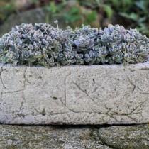 Сад в каменном корыте