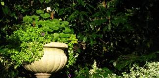 10 способов добавить света в тенистые уголки сада