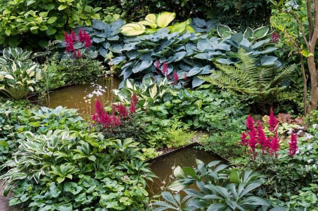 Среди растений, способных цвести в тени, не так уж и мало красивоцветущих культур, самая известная - астильба