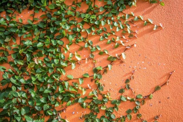 В тенистом уголке стоит решиться на смелые эксперименты даже в вопросе опоры для растений, будь то стена, пергола, арка или др.