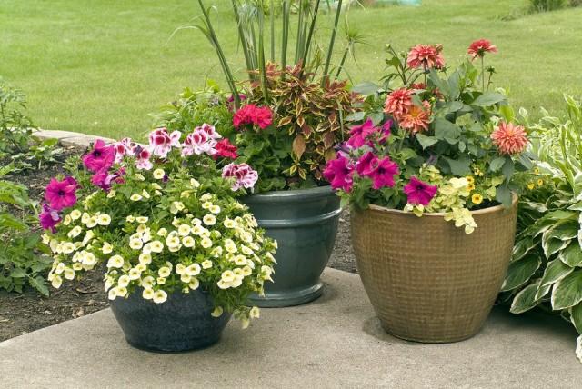 Светолюбивые растения также можно высаживать в тенистых уголках сада, но в контейнерах, которые должны получать больше света