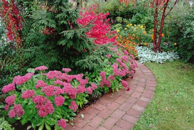 Очитники - неизменное украшение осеннего сада