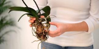 Правила посадки орхидей на блок и в субстрат